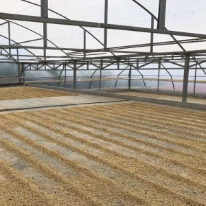 La Perla drying floor from Ladro Roasting Spring 2017 Coffee Buying trip